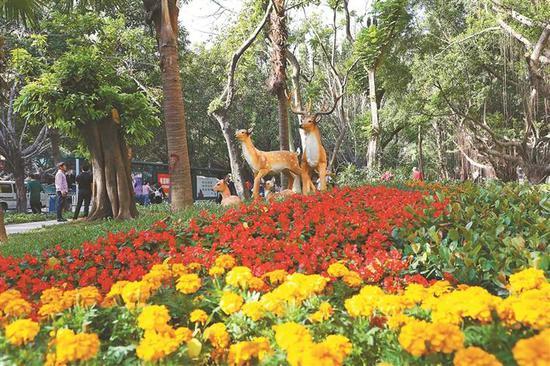 马家龙社区公园鲜花盛放。