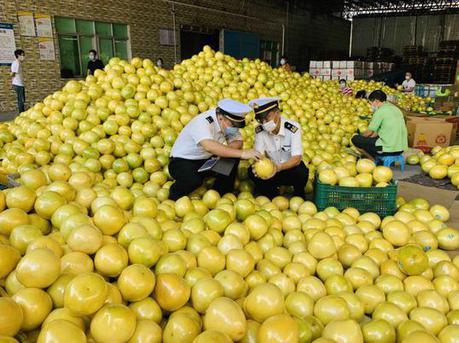 """水果出口恢复""""元气"""" 深圳海关实现水果出口""""零滞留"""""""