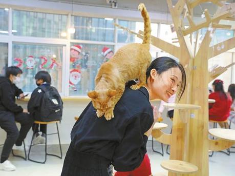 猫咪咖啡馆成为都市休闲新去处