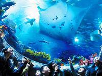香港多项公共服务加价 海洋公园成人票上调约14%