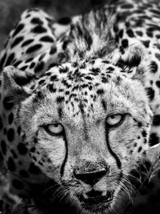 直击灵魂深处的野生动物摄影作品