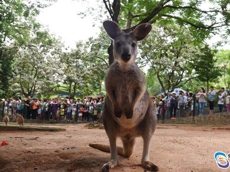 深圳野生动物园刷新单日游客纪录