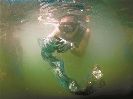 深圳蛙人守护鹏城水下世界 50人清理海底垃圾