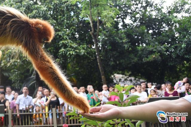 萌翻了!世界各地国宝级动物在深圳集合
