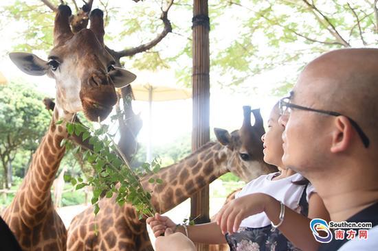 中秋节遇上世界动物日朱洪波摄