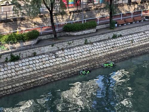 多辆共享单车疑被人扔林村河,其间有四、五辆单车堆放河中。图片来源:香港《大公报》