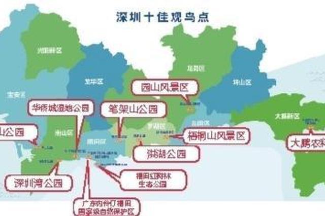 深圳这10个地方观鸟最佳 深圳市首届观鸟大赛即日启动