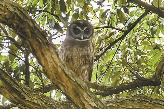 2018年深圳观鸟大搜查结果出炉 一年可见268种野生鸟类