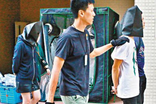 """房间设""""温室帐篷""""种植大麻 香港一对夫妇被捕"""