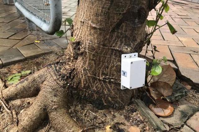 """香港将为8000棵树安装传感器 """"站不稳""""一斜便知"""