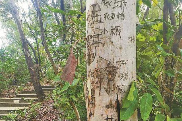 """莲花山公园登山道树木被刻""""到此一游"""" 公园已加强巡护"""