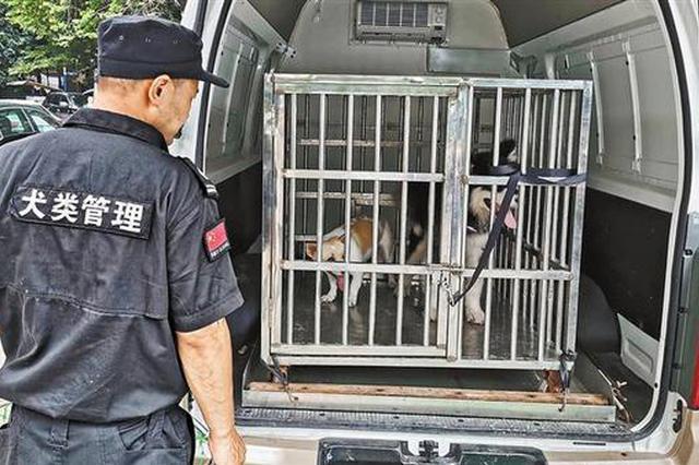 深圳对不文明养犬行为开罚了 昨日全市共查处248宗