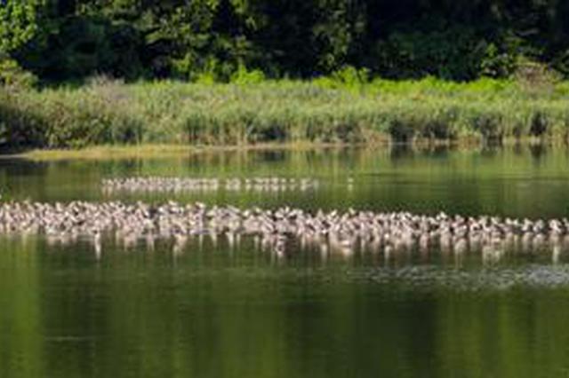 定了! 深圳福田红树林入选国家重要湿地名录