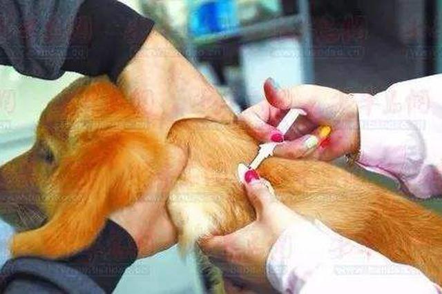 坪山四家定点宠物医院 可免费注射犬只电子芯片