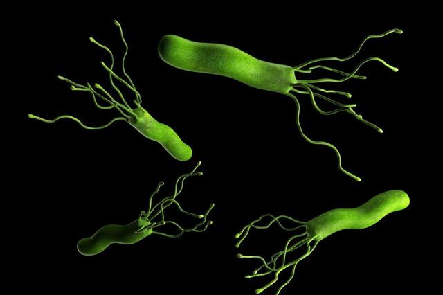 大鹏新区建立广东最大幽门螺旋杆菌标本数据库