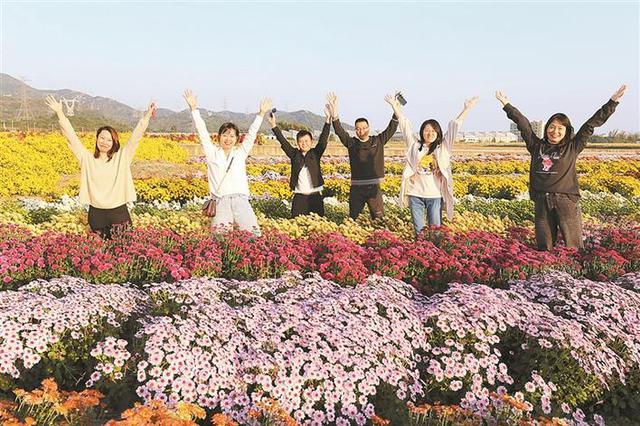 大鹏千菊展免费向市民开放 数百个品种的菊花形态各异五彩缤纷