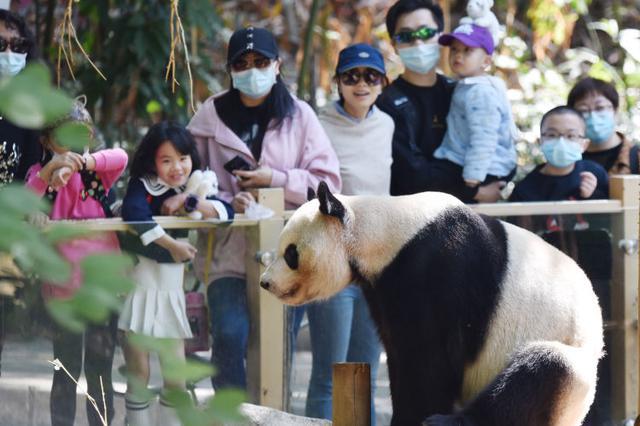 深圳野生动物园动物萌态十足吸引八方游客