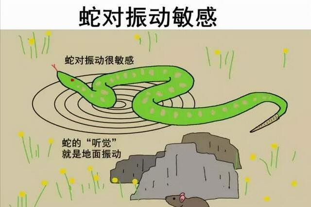 @市民:夏秋交替小心蛇出没