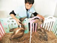 动物园人工喂养成活白鹈鹕