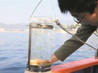 深圳东部海域现棕囊藻赤潮
