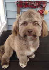 主人分享宠物照片吓坏网友