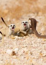 英野生动物摄影师大赛作品展出