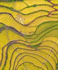 三峡库区高山冷水稻丰产丰收