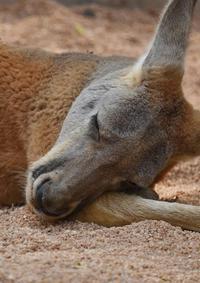 深圳野生动物园动物奇特睡姿