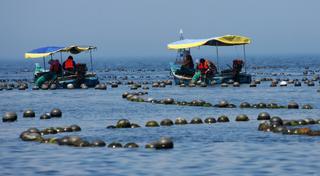 獐子岛蹭网红直播带货 预亏近4亿