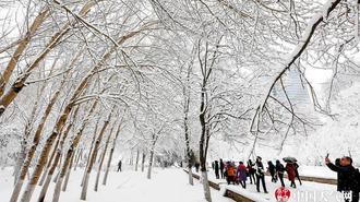 沈阳万物一夜之间穿雪衣 一夜达暴雪量级