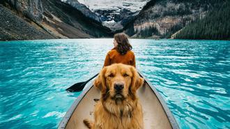 夏日出游季 带着宠物一起去旅行吧