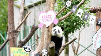 大熊猫宝宝生日会