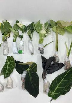 深圳邮局海关查获多宗外来植物和种子