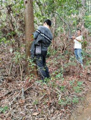 市民质疑仙湖植物园变林场