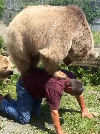 顽皮熊追着饲养员要背背 别忘了你体重363斤啊