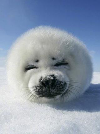 国际海豹日 来看看这些可爱的野生动物