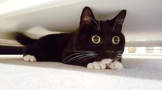 小黑猫靠铜铃大眼爆红网络