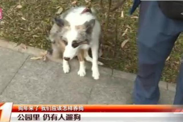 深圳市民莲花山公园遛狗 保安劝阻被咬伤