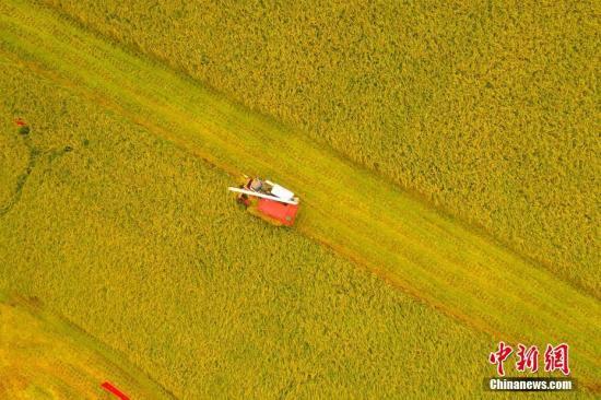 中国将加快推动《粮食安全保障法》起草工作