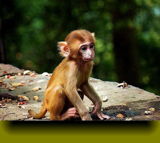 路边买猴获刑 检方:弄清野生