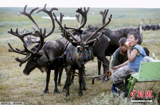 无锡百达翡丽手表5127R回收 法院下令扑杀驯鹿