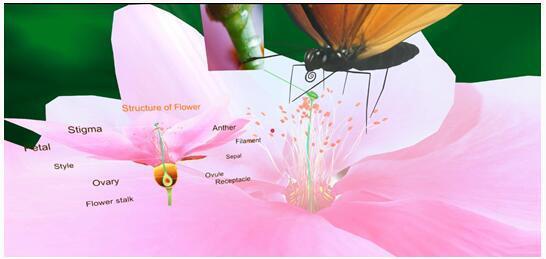 图三:《Pollination》课件场景