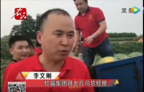 图:红瑞集团河北公司总经理李文刚接受河北电视台农民频道记者的现场采访