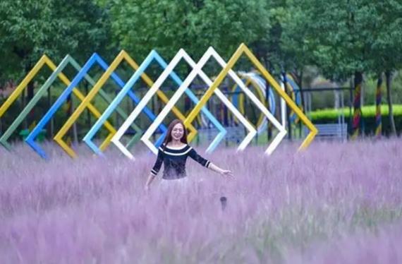 武汉郁金香公园,金色童年+粉色世界,变身小仙女免费拍照胜地