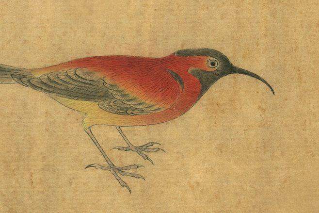 从五代黄筌到元代王渊的花鸟画