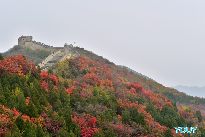 八达岭红叶岭-层林尽染风景如画