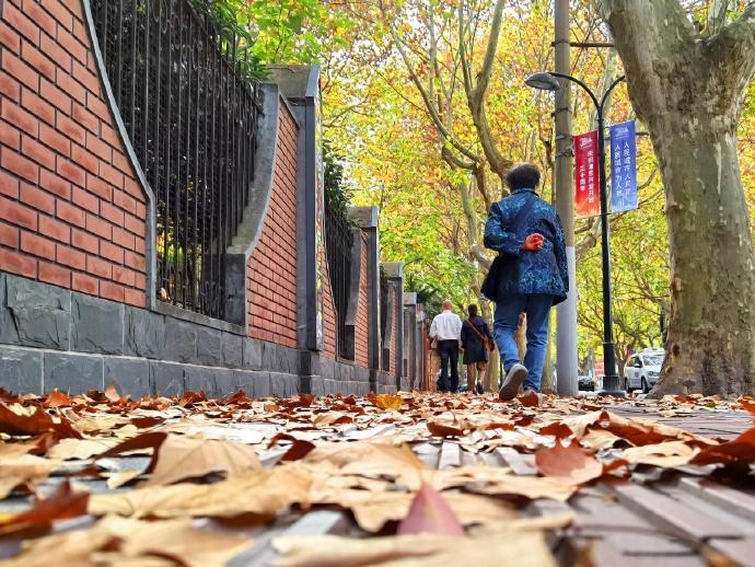 上海衡山路的落叶秋景图