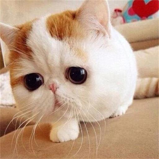 猫猫狗狗萌宠物