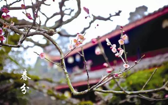 今日春分:趁取春光,莫负今朝!