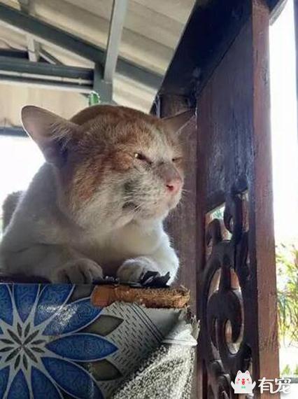 猫咪离家多日,回来时萎靡不振,原来被强制割蛋了!